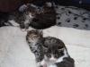 1-mois-chatons