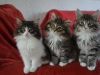 10-semaines-chatons-2
