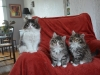 10-semaines-chatons-6