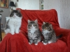 10-semaines-chatons-7