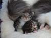 2-semaines-idyie-et-iron-cat
