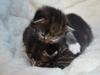 2-semaines-iron-cat-et-idyie-2