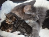 2-semaines-iron-cat-et-idyie-3
