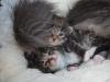2-semaines-iron-cat-et-idyie