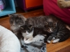 5-semaines-fenja-iloa-et-iron-cat
