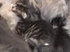 chatons-j1-2