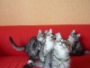 chatons-11-semaines-2