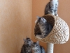 chatons-11-semaines-4