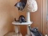 chatons-11-semaines-6