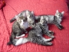 chatons-14-semaines-4