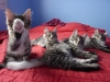 chatons-14-semaines-6