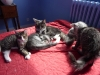 chatons-14-semaines-7