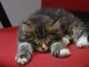 10-semaines-iron-cat-2