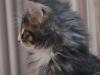 10-semaines-iron-cat-4