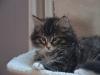 10-semaines-iron-cat-5