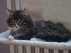 10-semaines-iron-cat-6