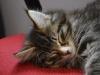 10-semaines-iron-cat-7