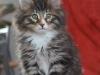 10-semaines-iron-cat