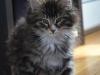 11-semaines-iron-cat-10