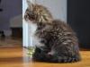 11-semaines-iron-cat-2