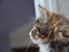 11-semaines-iron-cat-3