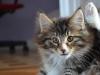 11-semaines-iron-cat-5