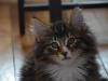 11-semaines-iron-cat-6