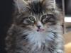 11-semaines-iron-cat-8