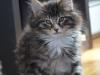 11-semaines-iron-cat-9