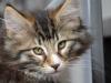 12-semaines-iron-cat-1