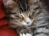 12-semaines-iron-cat-10