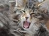 12-semaines-iron-cat-11