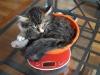 12-semaines-iron-cat-2