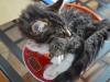 12-semaines-iron-cat-3