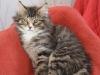 12-semaines-iron-cat-5