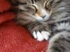 12-semaines-iron-cat-7