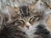 12-semaines-iron-cat-8
