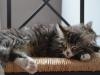 12-semaines-iron-cat-9