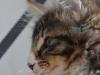 12-semaines-iron-cat