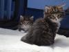 13-mars-iron-cat-1