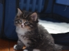 13-mars-iron-cat