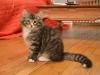 13-semaines-iron-cat-1