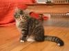 13-semaines-iron-cat-2
