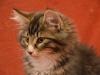13-semaines-iron-cat-3