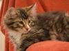 13-semaines-iron-cat-4