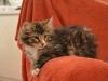 13-semaines-iron-cat-5
