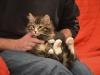 13-semaines-iron-cat-6