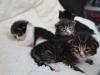 2-semaines-iron-cat-2
