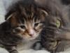 2-semaines-iron-cat-3