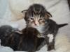 2-semaines-iron-cat-4